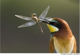Summer Visitors- migratory birds to South Africa