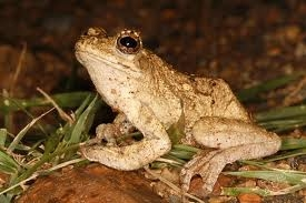 Things go croak and jump in the night.